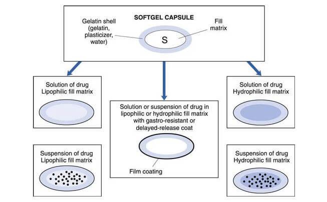 Anatomy of softgel